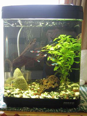 熱帯魚 水槽 アクアリウム